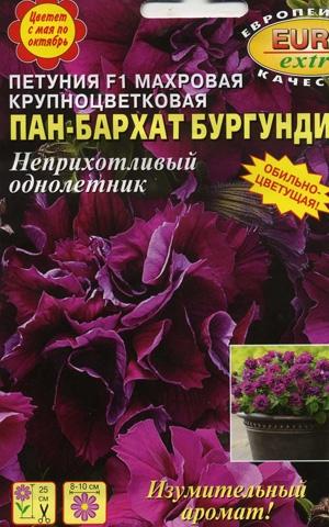 Петуния Пан-бархат Бургунди F1 махровая крупноцветковая обильноцветущая